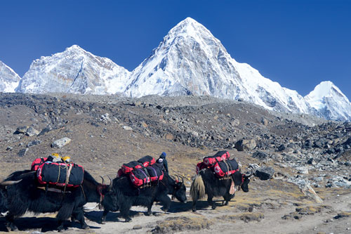 Gokyo Lake Chola Pass Trekking