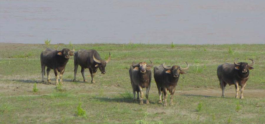 Koshi Tappu Wildlife Reserve Travel Guide